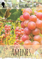 Amines Factsheet mini eBook Cover Pg